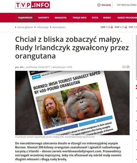Irlandczyk zgwałcony przez orangutana - TVP.Info