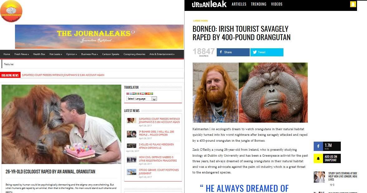 Orangutan zgwałcił turystę - artykuły na stronach zagranicznych